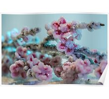 Cherry Blossoms Crystallized  Poster