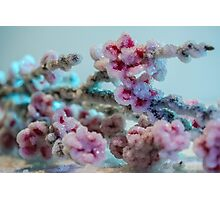 Cherry Blossoms Crystallized  Photographic Print