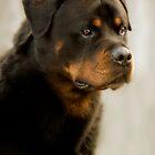 Rottweiler by Natalie Manuel