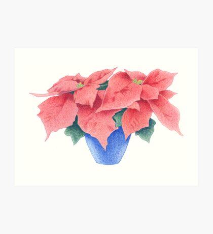 Poinsettia Art Print