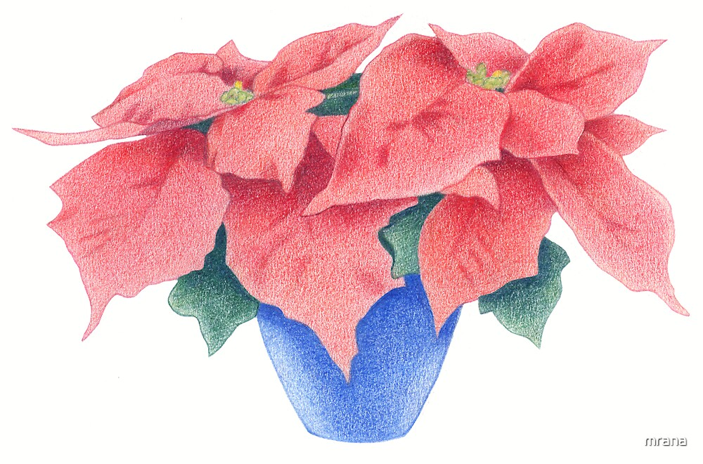 Poinsettia by Mariana Musa