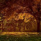 Fall Tree by SanjayKalyan