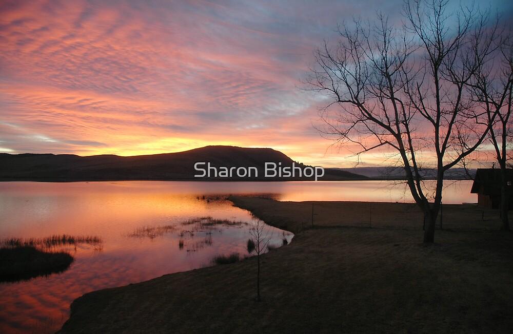 Firey sunrise  by Sharon Bishop