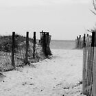 Seagull Beach by Tricia Stucenski