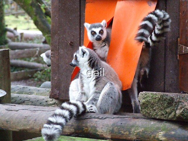 lemurs by gail