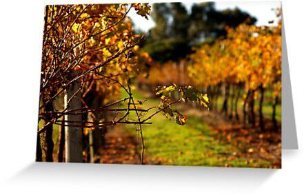 Autumn Vineyard by Michelle Shoosmith