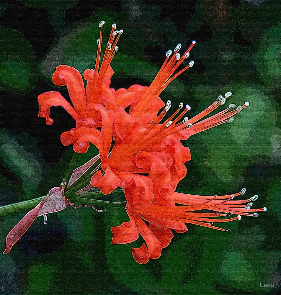 Red Nerine by Leeo