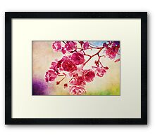 Cherry blossom water color Framed Print