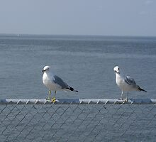 the 4 seagull-eteers by bluejayro