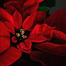 Poinsettia by Lois  Bryan