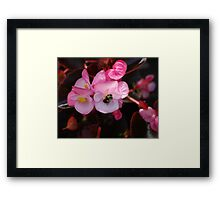 Bee on Pink Flower Framed Print