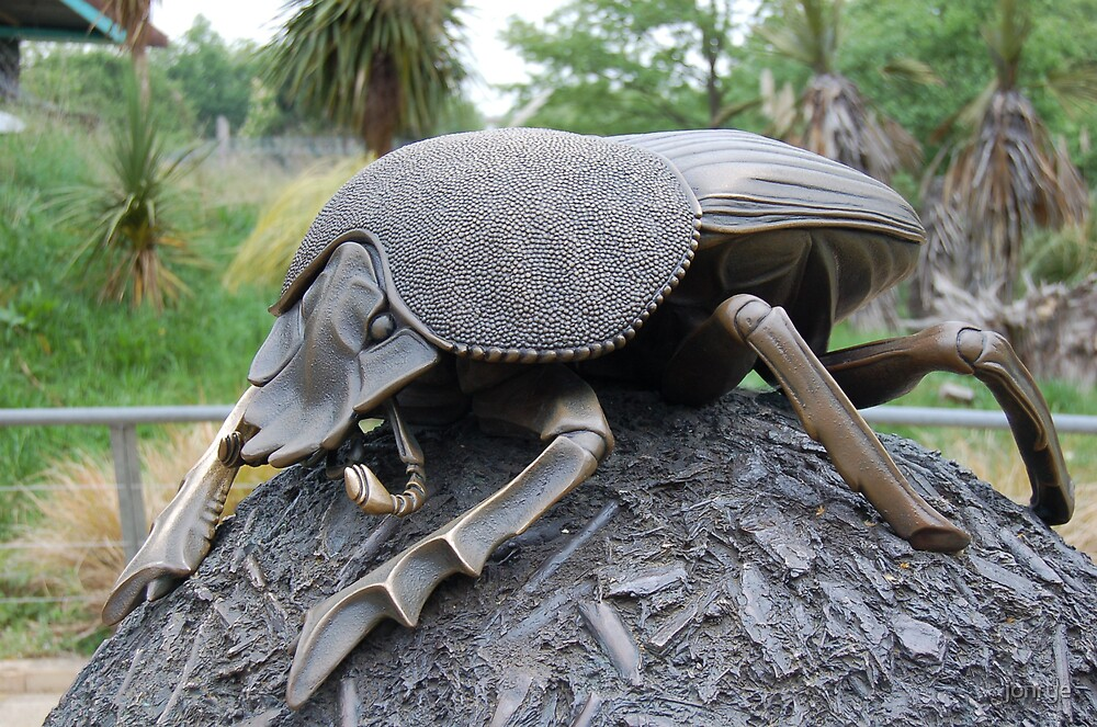 beetle by jonrye