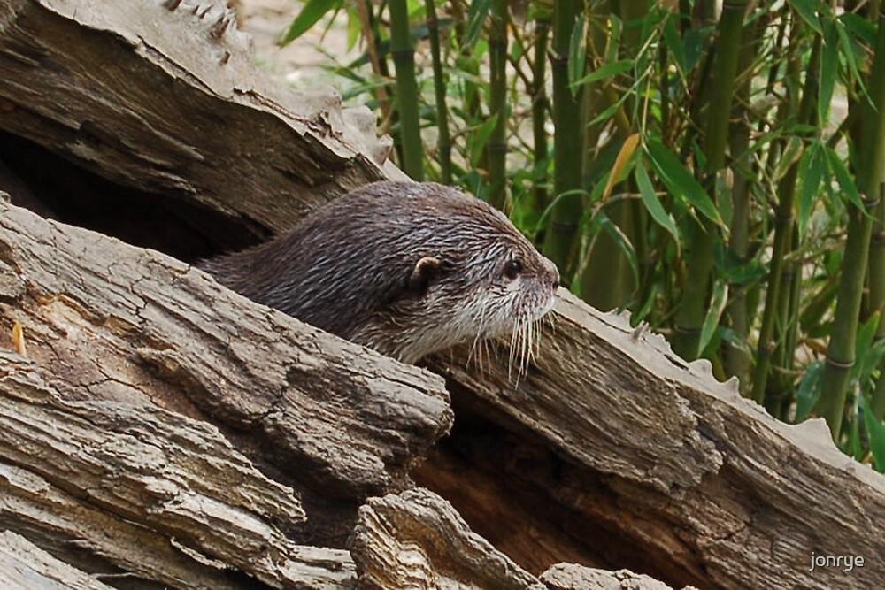Otter escape by jonrye
