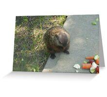 male groundhog Greeting Card