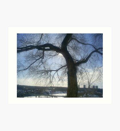 huge tree on hill Art Print