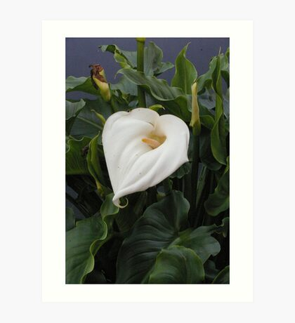 Lillies of the Valley Art Print