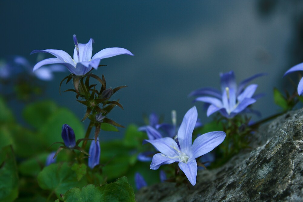 purple pelangihumaira by pelangihumaira