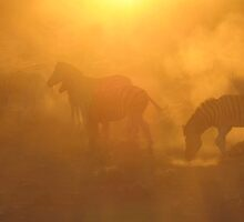 Zebras @ Dawn by scottsepicart