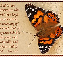 Romans 12:2 - Transformation by JLOPhotography