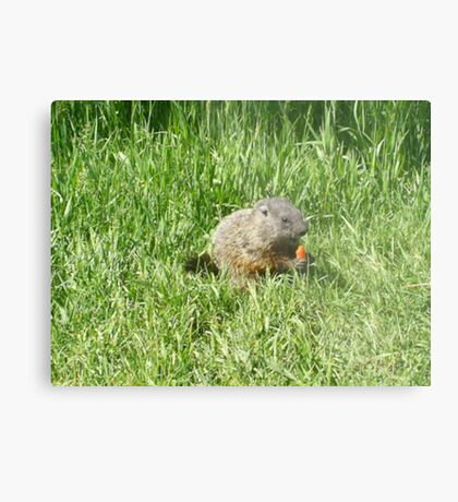 groundhog in the grass Metal Print