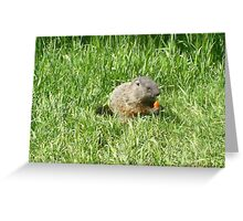 groundhog in the grass Greeting Card