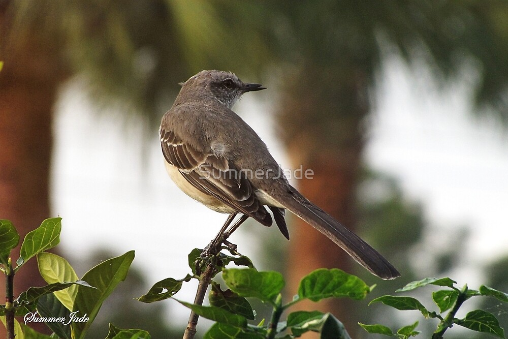 Mockingbird ~ Lady in Waiting by SummerJade
