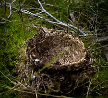Empty Nest by Gustav Nordlund