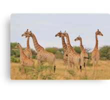 Giraffe Humor - African Wildlife - Amazing Stare Canvas Print