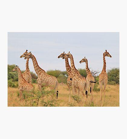 Giraffe Humor - African Wildlife - Amazing Stare Photographic Print