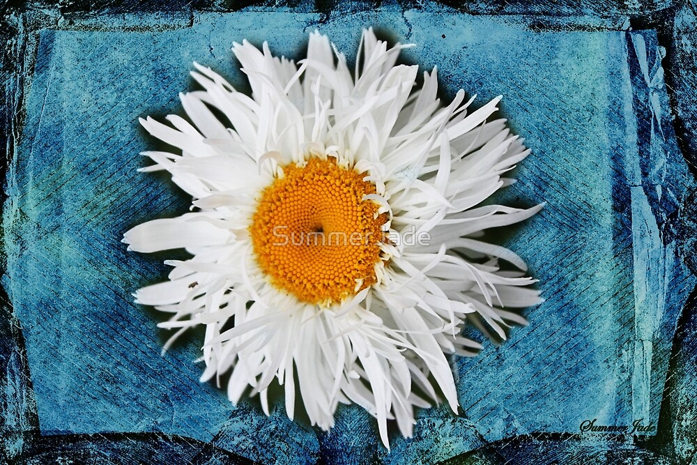 Daisy on Denim by SummerJade
