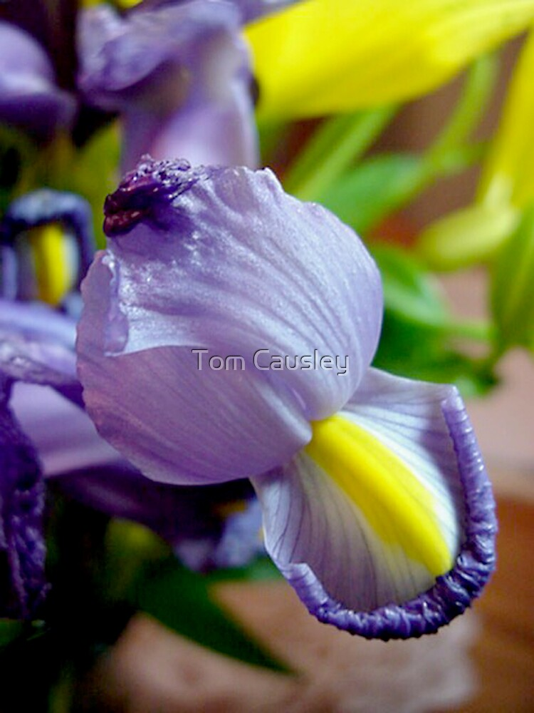 Purple Flowers by Tom Causley