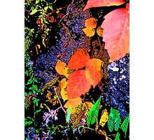 Vibrant and Colorful Leaf and Nature Design Photographic Print