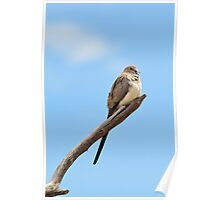 Namaqua Dove - Talking to the World Poster