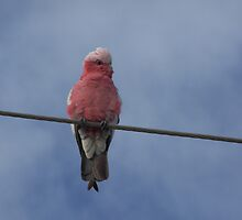 bird on a wire by Princessbren2006