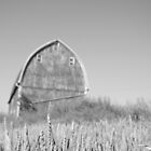 Barn near Saline by timpollock