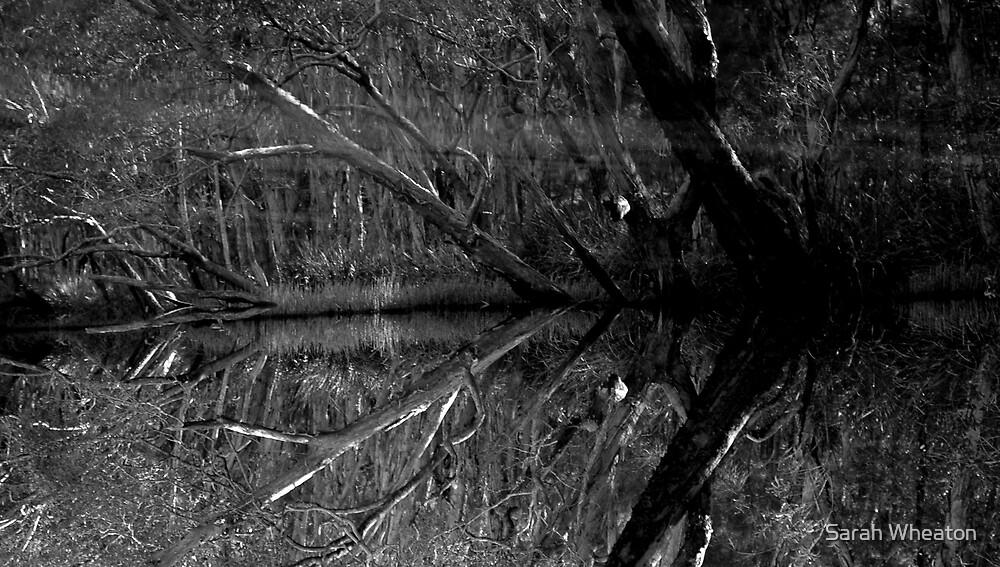 tree in deep water by Sarah Wheaton