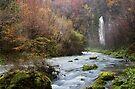 Autumn along Flumen river by Patrick Morand