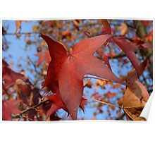 Red Leaves Fall 2014 Poster