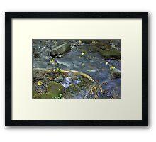 Renfrew Ravine - grass jam Framed Print