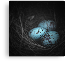 Nest of 3 Canvas Print