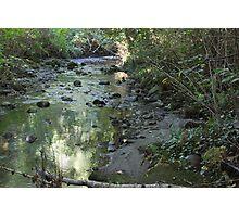 Renfrew Ravine - green pond Photographic Print