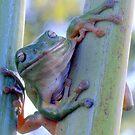 Smiling green tree frog by helmutk