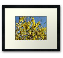 NATURE 18 Framed Print