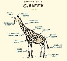 Anatomy of a Giraffe by Sophie Corrigan