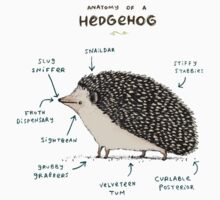 Anatomy of a Hedgehog Kids Clothes