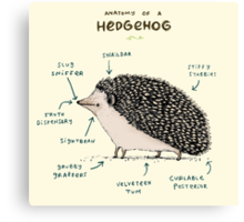 Anatomy of a Hedgehog Canvas Print