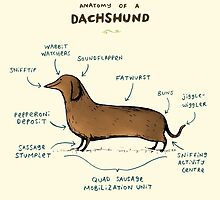 Anatomy of a Dachshund by Sophie Corrigan