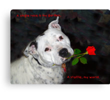 For the Love of Staffies Canvas Print