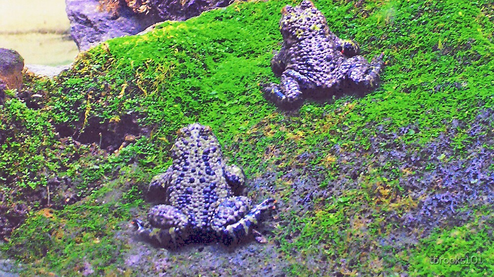 Toads... by tbrooks101