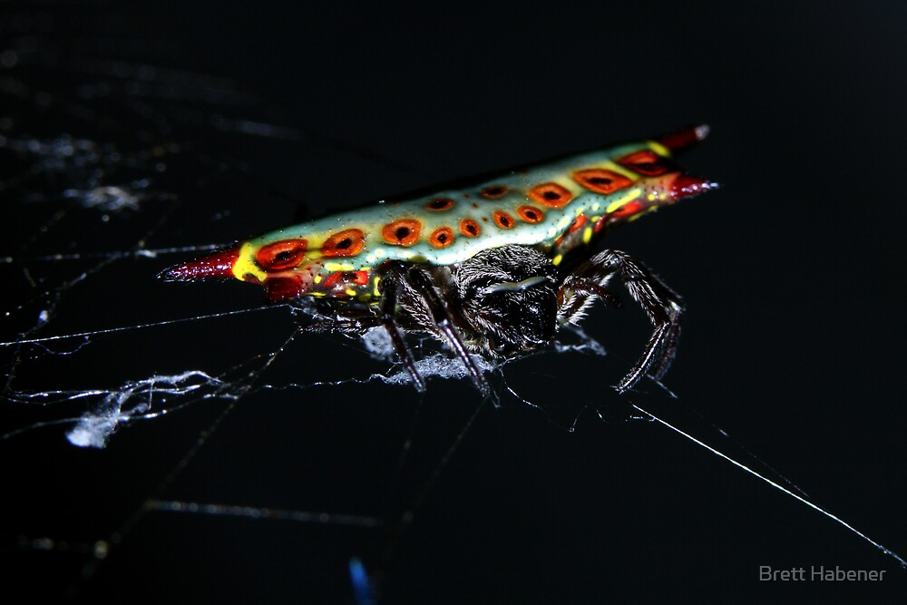 Spider? by Brett Habener